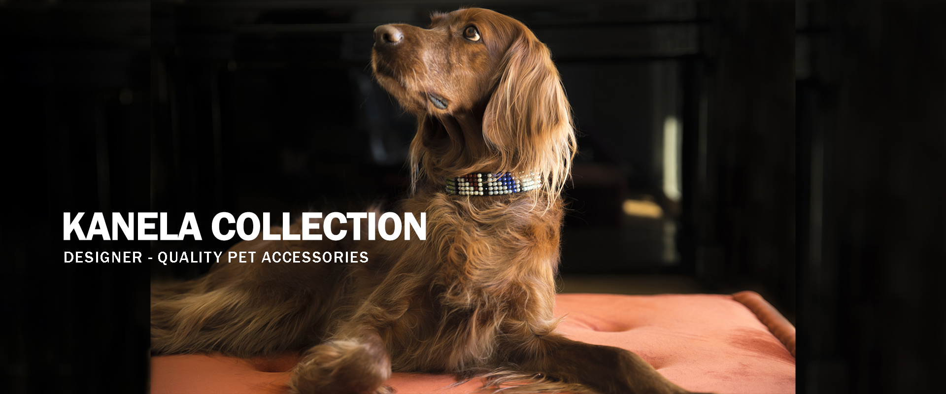 Kanela Collection | Designer-quality pet accessories by zikos