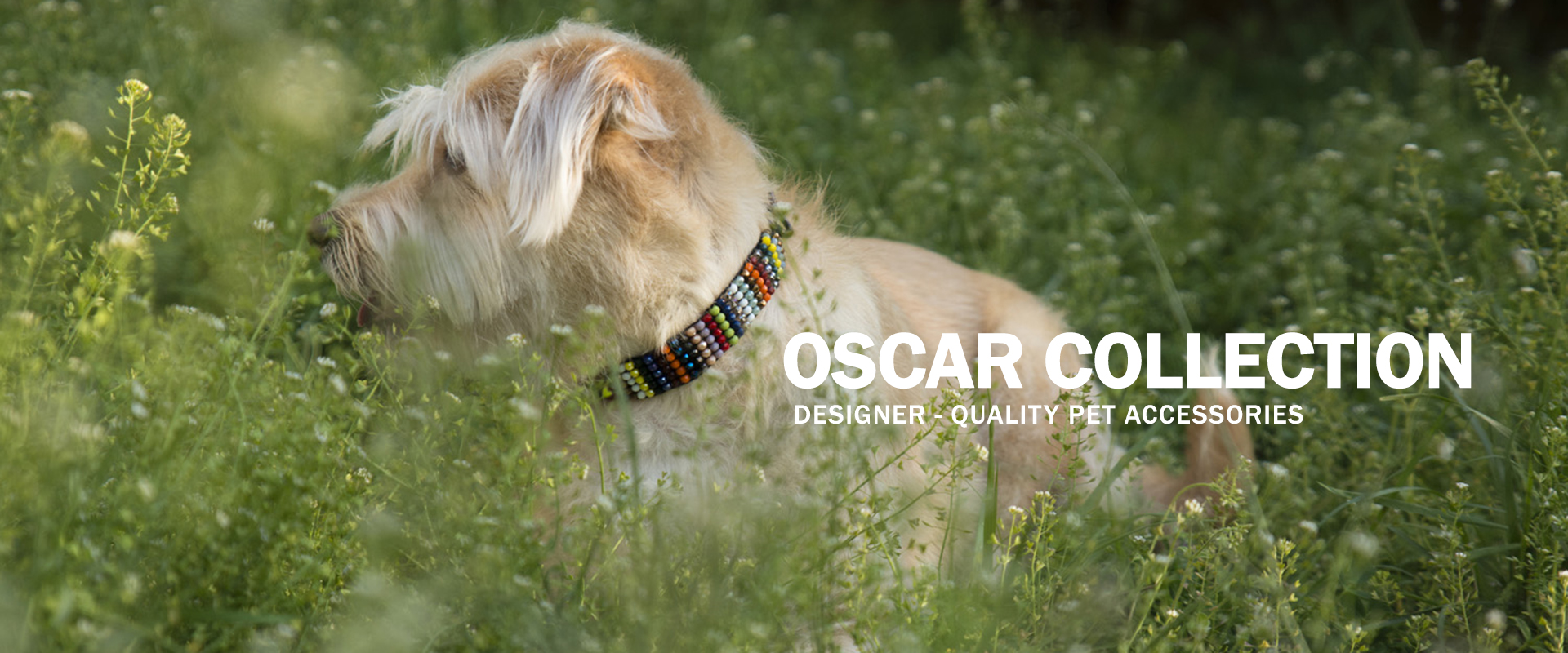Oscar Collection   Designer-quality pet accessories by zikos