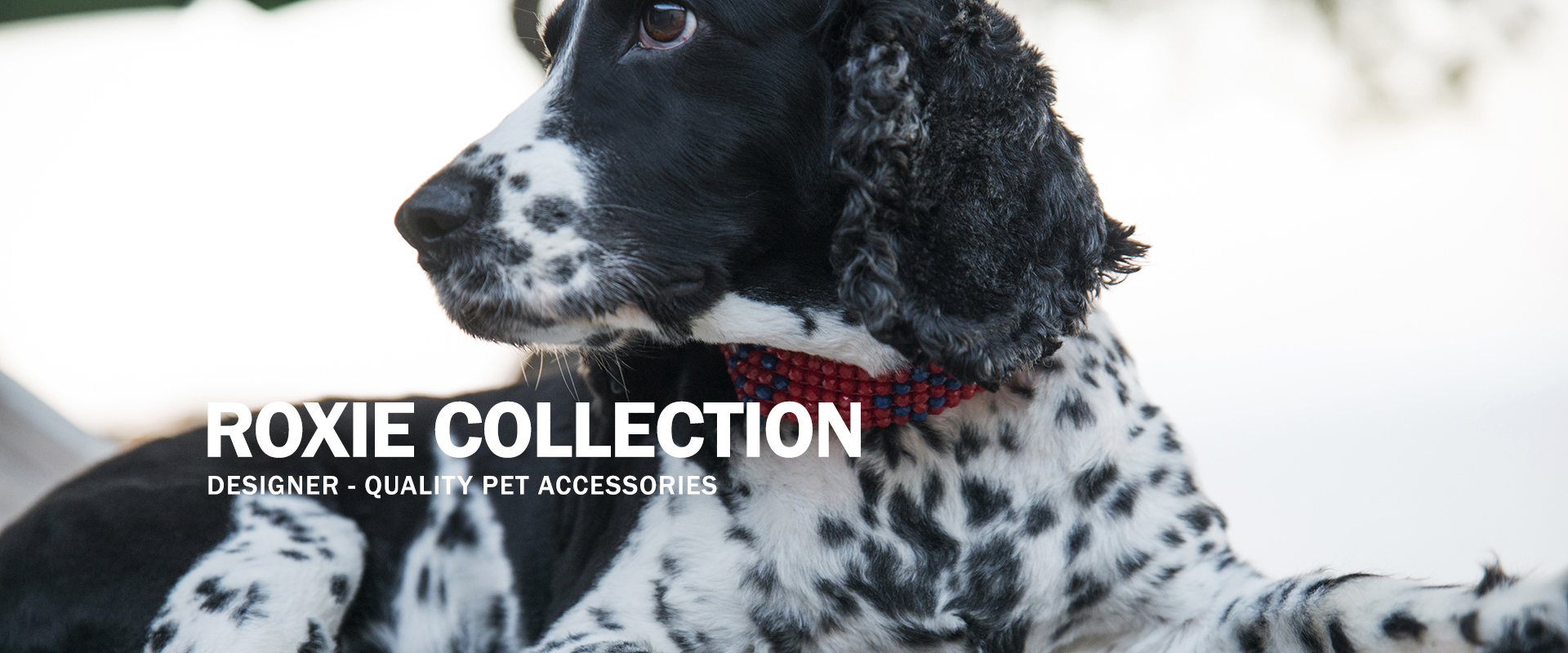 Roxie Collection | Designer-quality pet accessories by zikos