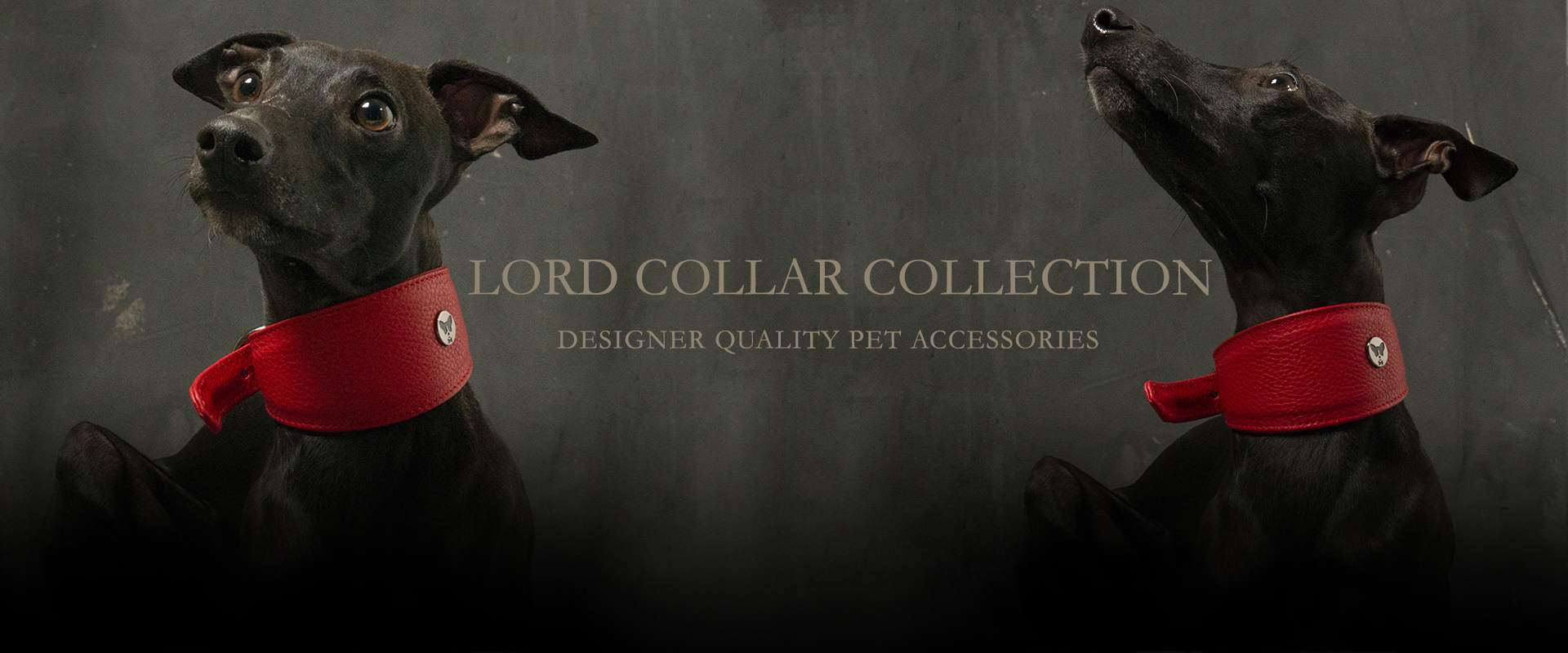 LORD COLLECTION | Designer-quality pet accessories by zikos